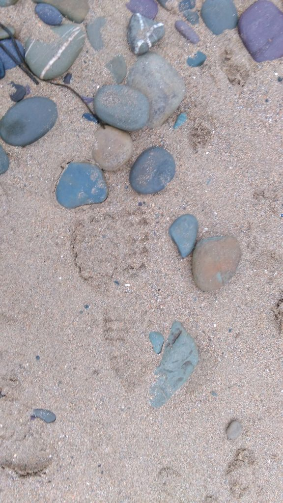 This image has an empty alt attribute; its file name is Footprint-Copy-576x1024.jpg